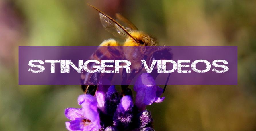 Stinger Videos